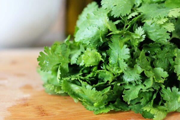 non-gmo cilantro seeds