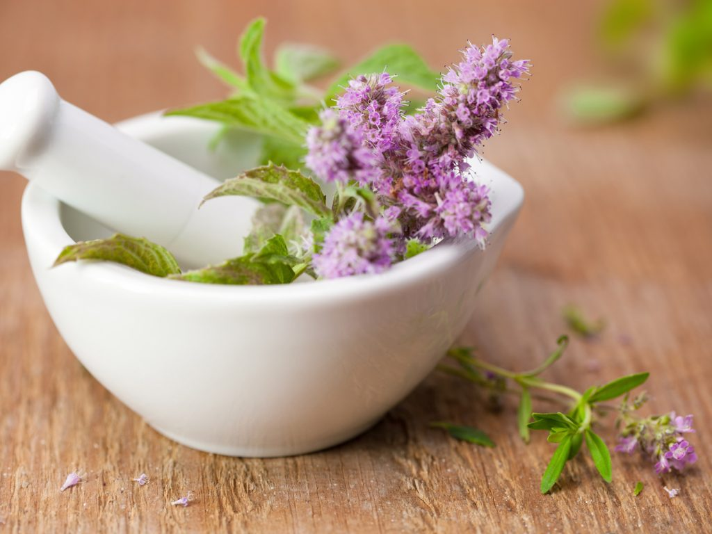 Medicinal Herbs that can help you