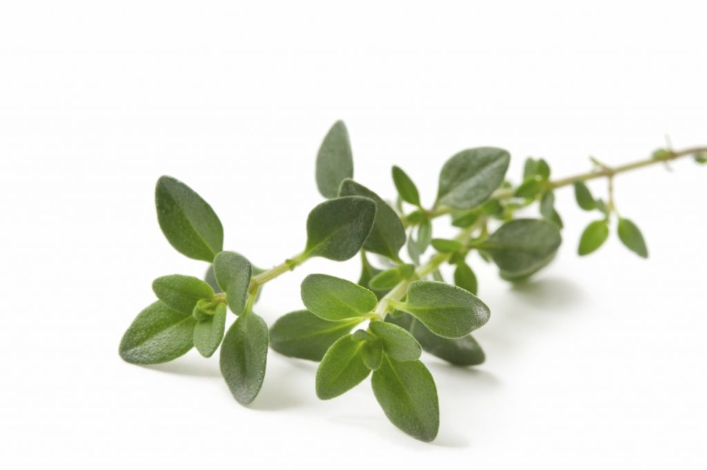 Thyme - Medicinal herbs to grow at home