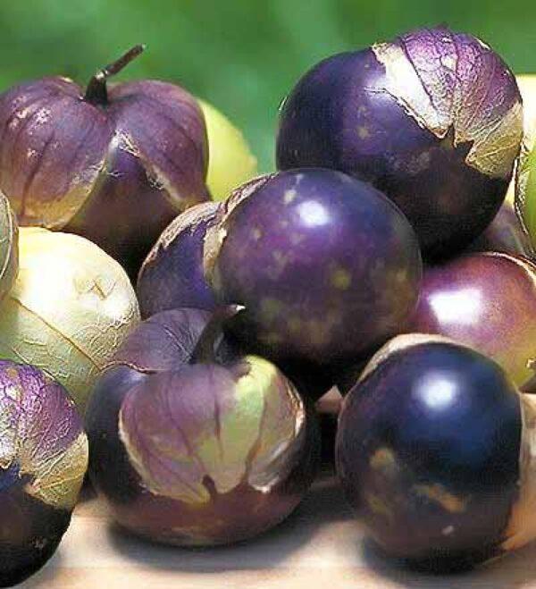 purple tomatillo seeds